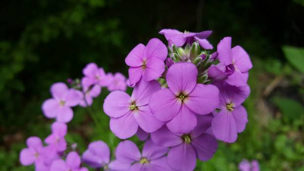 Beautiful flowers spring Free Photo