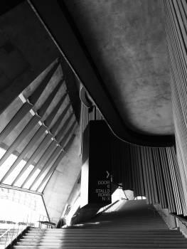 Harp Chordophone Musical instrument #52324
