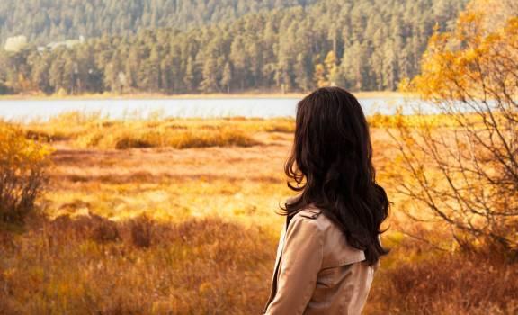 Beautiful countryside daylight forest #52871