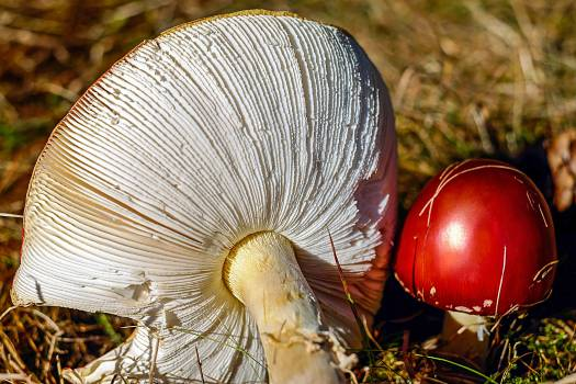 Autumn meadow fly agaric forest hat Free Photo