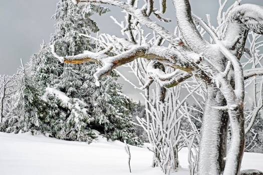 Baden wurttemberg black forest branch cold Free Photo