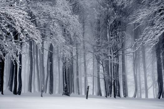 Black and white cold fog forest #52967