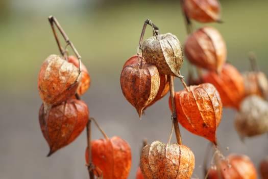 Autumn colors lantern nature #53045