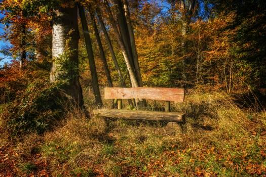 Autumn bench color countryside #53106