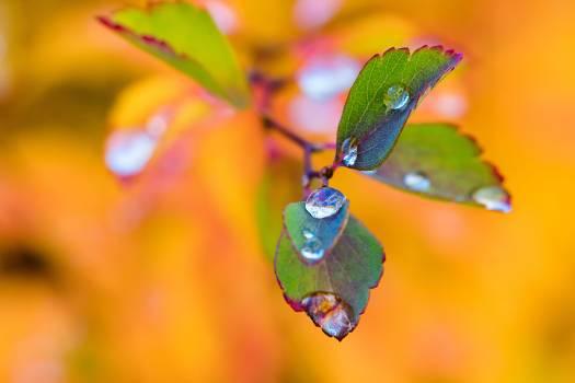 Aqua autumn autumn leaves blob Free Photo