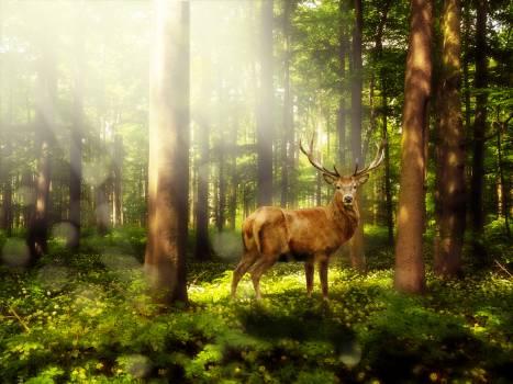 Atmosphere bear s garlic forest landscape #53209