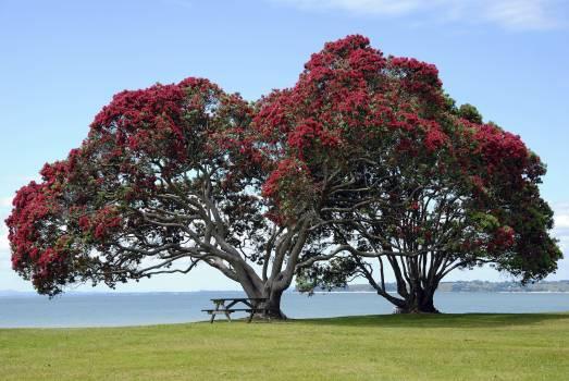Blossom christmas coastal evergreen culture #53256
