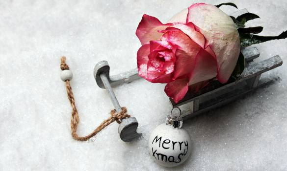 Background background image carriage with rose christmas Free Photo