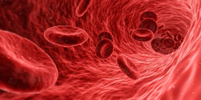 Analysis anatomy artery bacteriology Free Photo