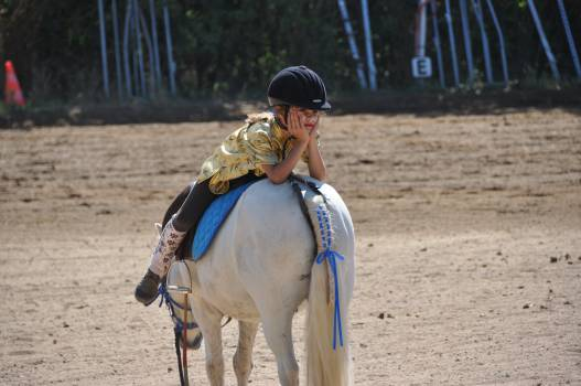 Animals child equine horse Free Photo