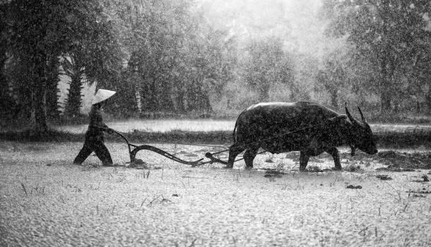 Agriculture asia beautiful cambodia #53493
