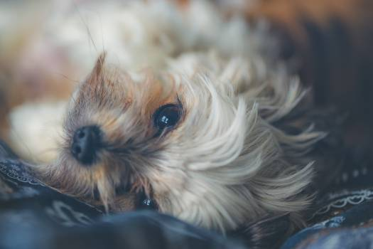Adorable animal canine close up #53563