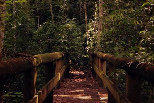 Adventure daylight environment foliage #53707