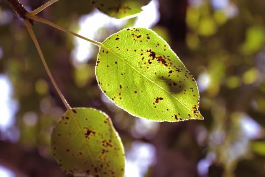 Green leaf spring leaf Free Photo