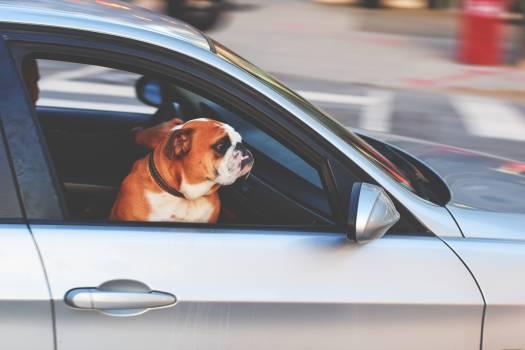 Adorable adult animal automotive #53747
