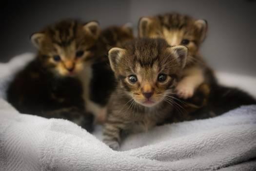 Adorable animals babies beautiful #53860
