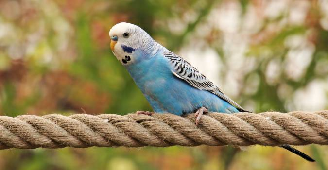 Animal animal world bird blue #53861