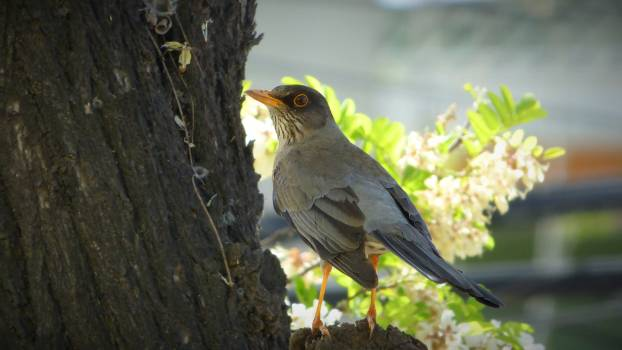Animal ave bird fauna Free Photo