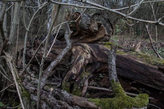 Forest rotten tree wood Free Photo