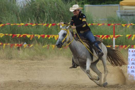 Animals equestrian horse horsehead Free Photo