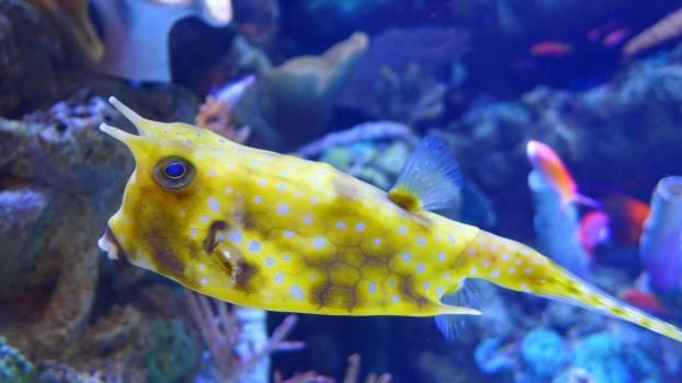 Aquatic close up colorful coral #54222
