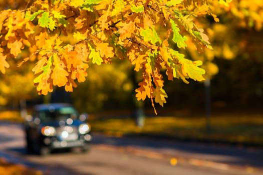 Asphalt autumn car color #54266