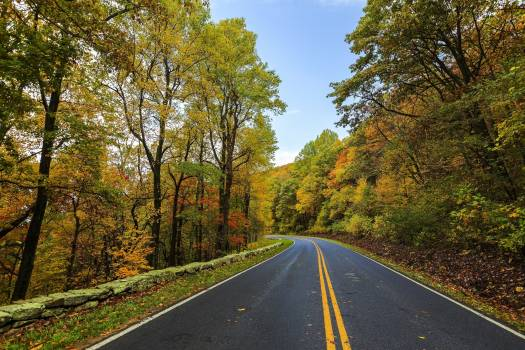 Asphalt autumn beauty colorful #54281