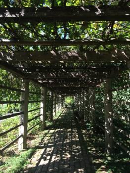 Arbor garden path vineyard #54564