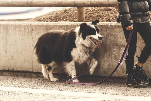 Adult animal canine concrete #54665