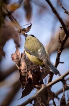 Animal bird leaves nature Free Photo