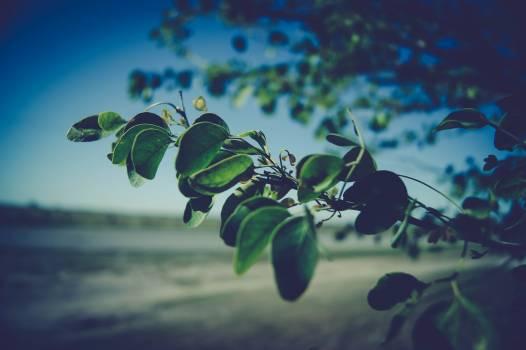 Nature Free Photo