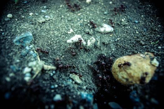 Reef Coral Underwater #54869