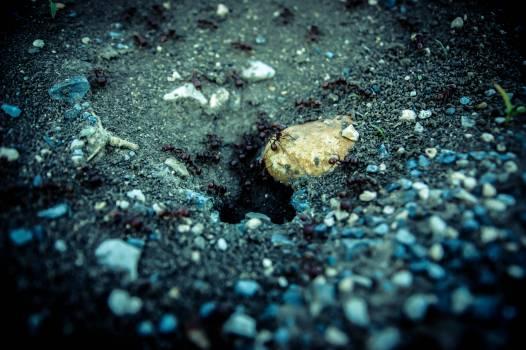 Ants blur close up environment #54872