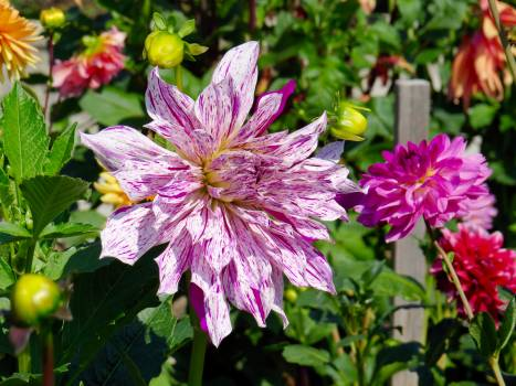 Pink Flower Plant #54909