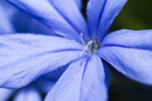 Flower macro macro photo macro photography #54924