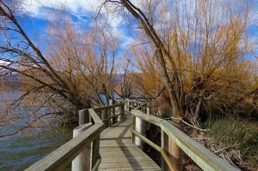 Blue sky branches bridge railing countryside #54939