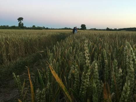 Field straw dusk sunset walk #55223