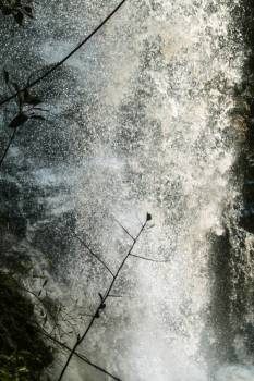Forest nature waterfall Free Photo