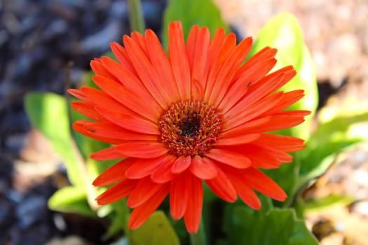 Beautiful flowers colourful plants Free Photo