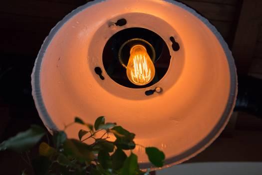 Bulb leaves light lightbulb #55504