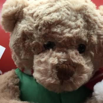Teddybear #55523