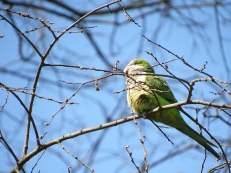 Finch Bird House finch Free Photo