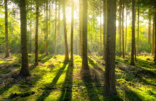 Bright daylight environment forest Free Photo