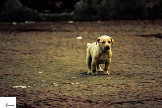 Puppies Free Photo