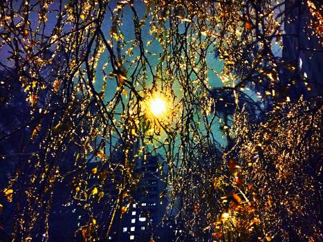 Season Tree Plant Free Photo