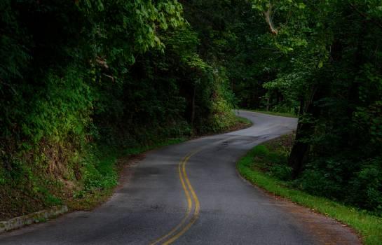 Way Road Bend Free Photo