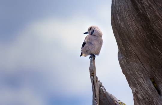 Bird Kite Hawk #56455