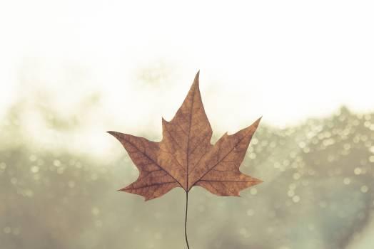 Day daylight fall leaf #56651