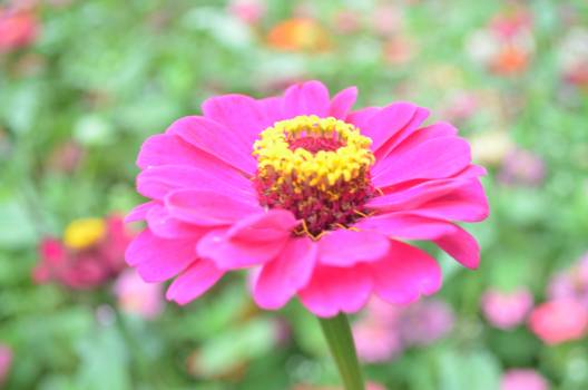 Pink Flower Petal Free Photo