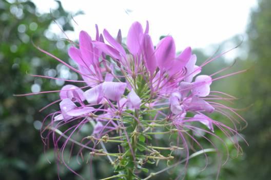 Pink Flower Plant #57433